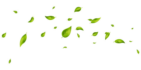 Fototapeta Vegan, eco, organic design element. Green leaves flying on white banner. Wave foliage ornament. Leaf falling. Beauty product. Fresh tea background. Cosmetic pattern border. Vector illustration obraz