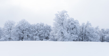 Obraz Minimalistic winter landscape in cloudy weather with snowy trees. Carpathian mountains, Landscape photography - fototapety do salonu