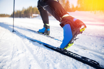 Obraz Cross country skiing Banner, winter sport on snowy track, sunset background - fototapety do salonu