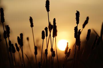 Fototapeta Widok na trawę oświetlaną promieniami wschodzącego słońca.  obraz