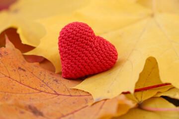 Fototapeta Red knitted heart on yellow maple leaves in autumn park. Concept of romantic love, fall season obraz