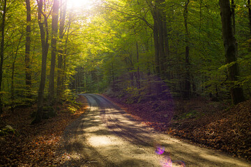 Sunlight over a forest country road