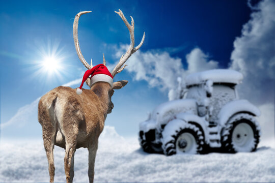 Hirsch vor einem zugeschneitem Traktor