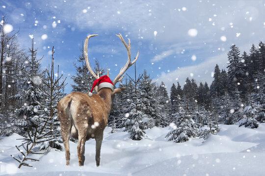 Hirsch mit Nikolausmütze im zugeschneiten Wald