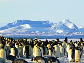 penguin on the ice