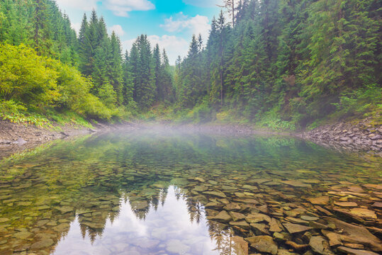 Forest misty blue lake in autumn fall mist pine forest