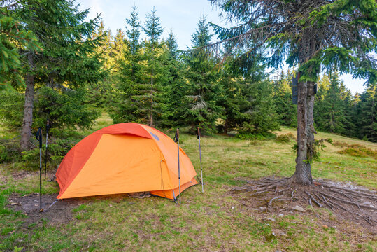 Orange tent camp in green pine forest with camping