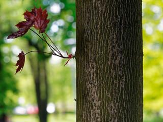 Obraz park tree trunk park drzewa - fototapety do salonu