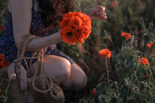 girl collects wild poppies in the field at sunset.