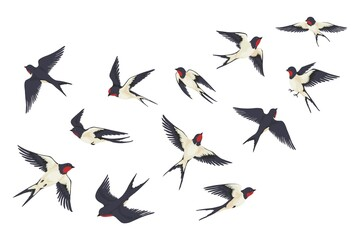 Fototapeta Flying birds flock. Cartoon hand drawn swallows in fight with different poses, kids illustration isolated on white. Vector set obraz