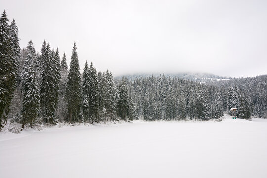 winter scenery in mountains. gloomy landscape with spruce forest on a cloudy day. frozen lake covered with snow. synevyr national park, ukraine