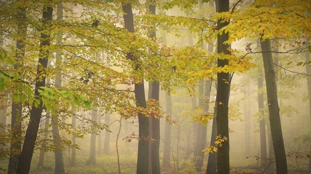 Autumn forest. Natural colorful background with trees and fog in the forest