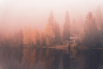 Fototapeta Fog. Autumn and the fog is so dense it is difficult to see more than a couple of meters. obraz