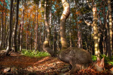 ostrich in the woods
