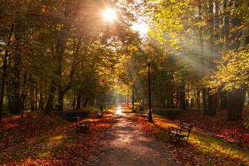 Fototapeta Jesienny poranek w parku miejskim obraz
