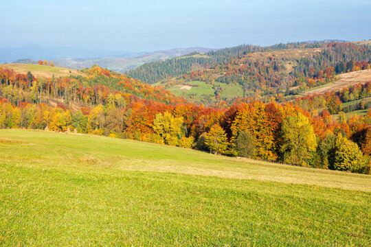 autumnal countryside scenery in mountains. trees in colorful foliage on the grassy meadows. hills rolling in to the distance. wonderful environment of carpathians in fall season on a sunny day