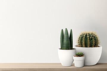 Fototapeta Small cacti with a white wall background obraz
