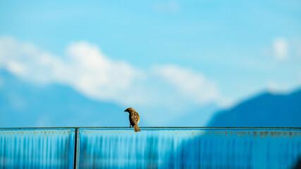Fototapeta Birds sitting on the fence obraz