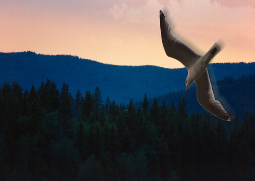 Seagull Above Mountain Forest