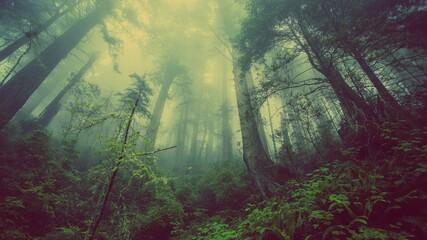 Fototapeta Madio ambiente ,flora y fauna  obraz