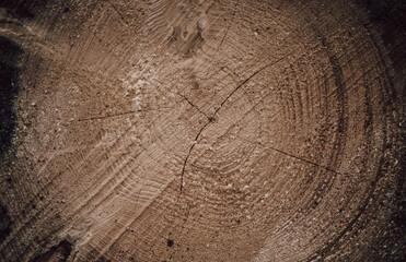 Obraz Przekrój drzewa - fototapety do salonu