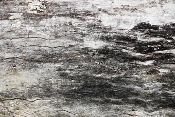 Fototapeta korą pień struktura drewna wood tekstura surfach bark rond cortec tree woody obraz