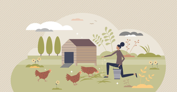 Backyard chickens farming and hens feeding with seeds tiny person concept. Ecological domestic animal care for organic slow food vector illustration. Happy and ethical birds keeping for eggs and meat.