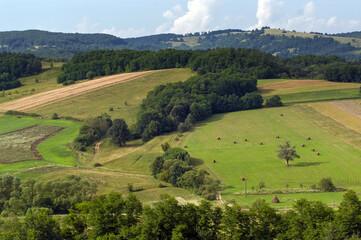Fototapeta Pola ziemia uprawna latem w otoczeniu lasów obraz