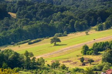 Fototapeta Pola ziemia uprawna latem w otoczeniu lasów panorama obraz