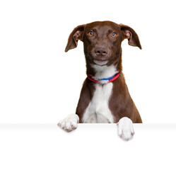 Obraz studio shot of a cute dog on an isolated background - fototapety do salonu