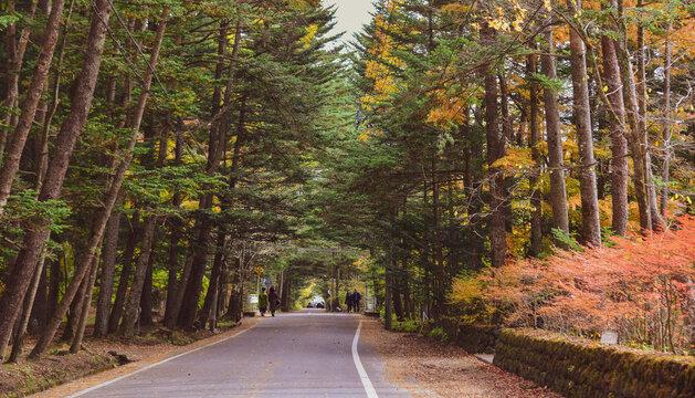 Rural road in Karuizawa, Japan