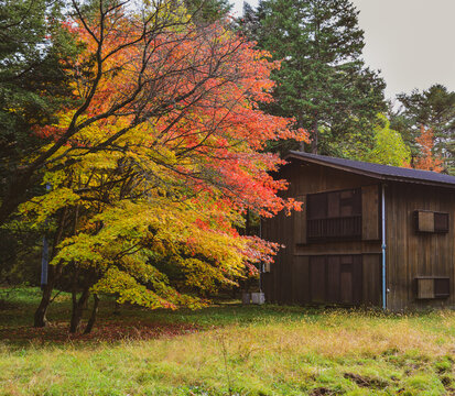 Beautiful countryside scene in autumn