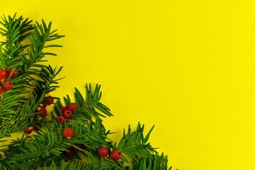 Fototapeta Zielona gałązka z czerwonymi owocami na żółtym tle. obraz