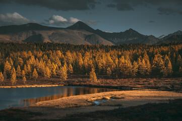 Obraz Beautiful lake in the yellow larch forest. Fall season. - fototapety do salonu