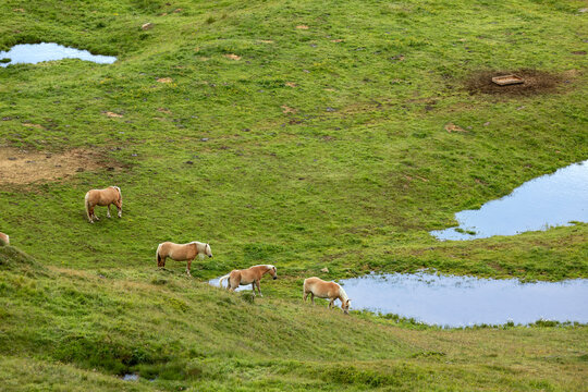 wild horses on pasture