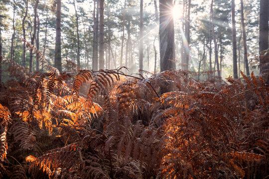 morning sunlight in autumn fern forest