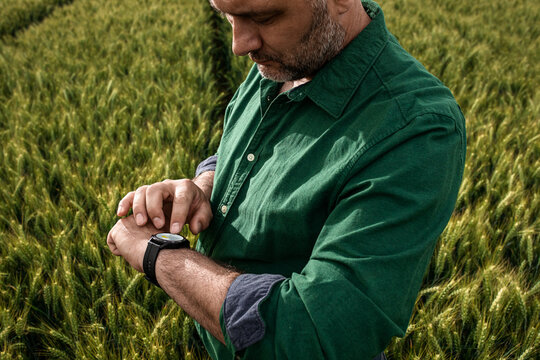 Portrait of farmer standing in wheat field looking forecast at smart watch.