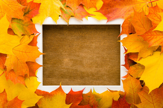 Fresh beautiful colorful maple leaves around white frame. Closeup. Autumn concept. Empty place for inspirational text, quote or sayings on dark brown wooden table background. Top down view.
