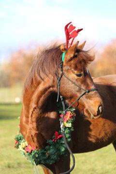 Horse waiting for Santa Claus