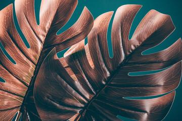 Fototapeta Tropical monstera leaves, floral pattern background, obraz