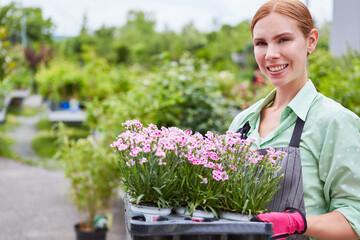 Obraz Junge Frau in der Ausbildung zur Floristin trägt Geranien - fototapety do salonu