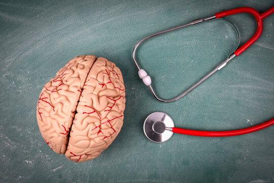 Plastic brain model and doctor's stethoscope. Fake news concept