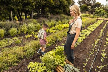 Obraz Happy single mother harvesting vegetables with her son - fototapety do salonu