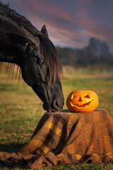 Black horse with a halloween pumpkin