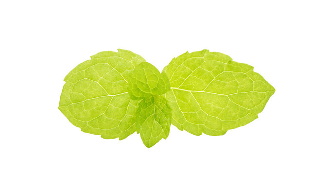 Green mint leaves on a white background.