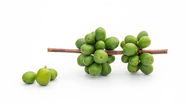 Green arabica coffee beans on a white background.
