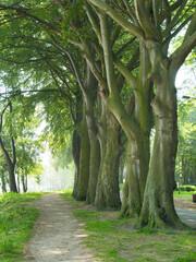 Obraz drzewa park - fototapety do salonu