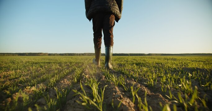 Farmer walks through a young wheat green field. Bottom view of a man walking in rubber boots in a farmer's field, blue sky over horizon. Human walking on agriculture field