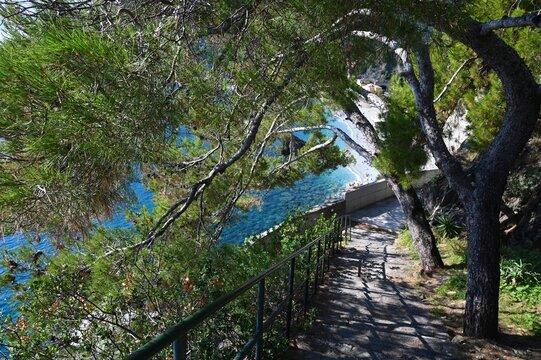 Pini che coprono il percorso per il convento dei cappuccini di Monterosso al Mare