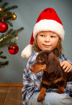 Boy playing indoor with dog near the Christmas fir tree.